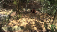 原始生活 第79集 用石头和木头建造一个鸡舍