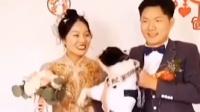 婚礼现场拍照时,狗狗一脚踢开了新娘,还转头向新郎要亲亲