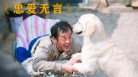 残疾老人孤苦无依,只和老狗相依为命,最后却为四千块将它卖了