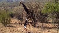 男子误闯长颈鹿领地,玩起躲猫猫,镜头拍下搞笑一幕!