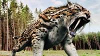 盘点有史以来最强的10大猫科动物:非洲狮仅排第9,那东北虎呢?
