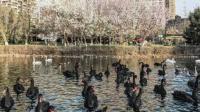 沈阳发生野禽H5N6亚型高致病性禽流感疫情,扑杀野禽280只