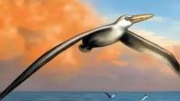 世界长存在过最大的鸟,只会飞不会降落