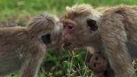 """河南有个景区被誉为""""亚洲一绝""""却被遗忘,这里还能看到野生猕猴"""