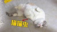 母猫怀孕40天后,行为越发怪异,这是怎么了?