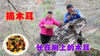 下雨了,霞姐大山里采野木耳炒鸡蛋吃,弟弟说吃过有20多年了!