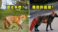 6个世界上独特又稀有的动物!红尾黑色渐变狐狸,进化失败了?