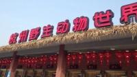 浙江小区现豹子 为杭州野生动物世界出逃