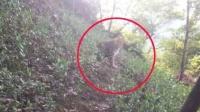 豹子现身杭州小区 媒体:从动物园出逃