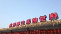 杭州出逃金钱豹被麻醉捕获 现场视频