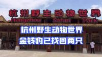 杭州野生动物世界金钱豹已找回两只!3部门联合对园区进行检查