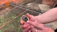 黄缘龟腹甲为什么有两个坑「龟谷鳖老」