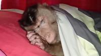 猴子赖床不起,被主人掀开被子,下一秒请憋住别笑