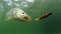 老外钓到这么大的鱼,一般都会放生