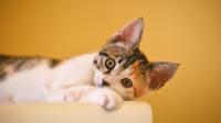 猫猫也太聪明了,还会自己关门
