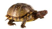 小乌龟花园中洗澡,扭屁股也太可爱了