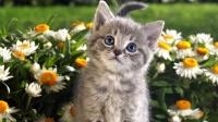 发现一篮子的小猫咪,太可爱了