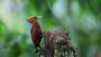 不一样的啄木鸟,对着外墙一阵输出