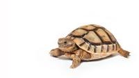 小乌龟在水中仰泳,也太可爱了
