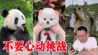 【不要心动挑战】萌宠版2, 大熊猫.狗狗这么可爱你能忍住吗?小浪