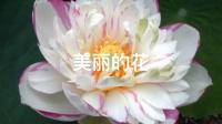 美美的漂亮的花花的可可爱的小仙了