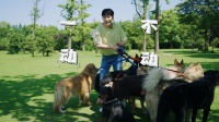 尖叫连连!王博文为你揭秘宠物训导师的日常