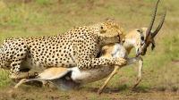 Serengeti II 塞伦盖蒂 第二季 EP2
