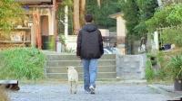 神犬小Q3:一条导盲犬的一生
