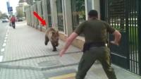 """俄罗斯棕熊""""越狱""""出逃,结果竟被这样对待"""