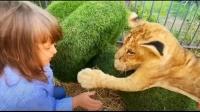 """俄罗斯2岁小女孩硬核""""撸猫""""!网友:不愧是战斗民族"""
