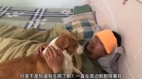 当狗狗发现主人生病后,竟破门而入,冲到床边默默陪伴在主人身旁