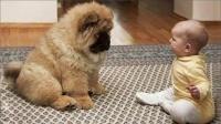 宝宝和小狗在房间吵架,骂不过直接上手打,下一秒请憋住不要笑
