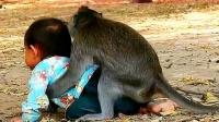 刚把宝宝交给猴子,下一秒猴子突然来了个背摔,镜头记录搞笑过程
