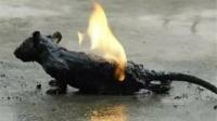 男子将汽油灌入老鼠洞,随后一把火点着,镜头拍下全程
