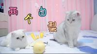 小猫咪之间也会有感情吗?这是一只让人感动的梨