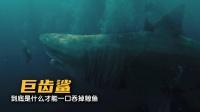 远古的超级生物巨齿鲨,到底有多可怕!01