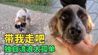 野外偶遇流浪狗,为求收留拼命讨好路人,获救后它开心得像个孩子