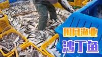 沙丁鱼为什么便宜,捕捞产量太高!