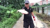 我们捕鱼人的宗旨是抓大放小,外来物种一律带走。