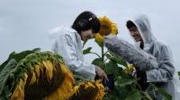 杨英格&哈拉木吉《歌从草原来》纪录片