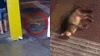 1小时内4只小猫从高楼坠亡,目击者:声音像爆炸