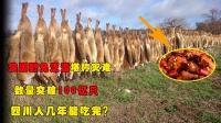 澳洲野兔泛滥堪称灾难,数量突破100亿只,四川人几年能吃完?