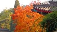 香山红叶预计下周末迎最佳观赏期