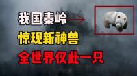 """我国秦岭发现""""新神兽""""!仅此一只,全世界都羡慕中国!"""