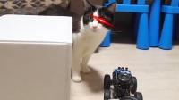 如何惹恼一只猫?网友:这主人是真的狗啊