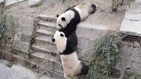 可爱熊猫大战一百回合