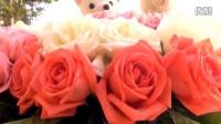 杨丹曾思思新婚庆典视频