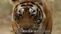 老虎的復仇