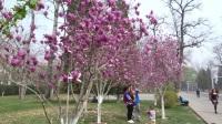 春满龙潭湖