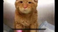 温暖生命篇❤抑郁症小猫咪得到收养